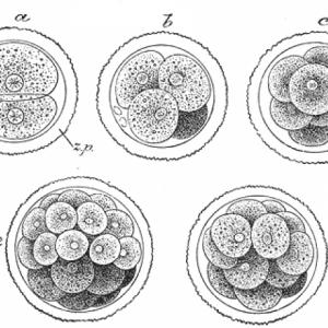 embryogenesisthumb-1.png