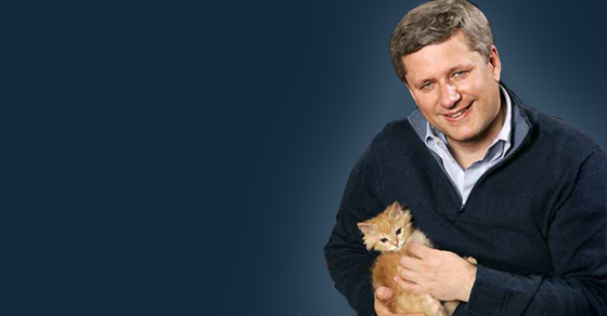 harper-cat_thumb-1.png