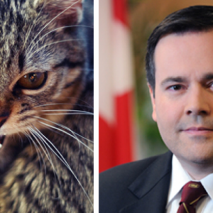 kenney-cat-thumb-1.png