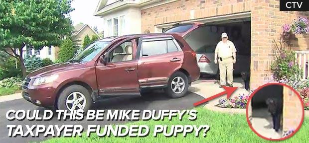 taxpayerfunded-puppy.jpg